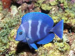 fish tropical