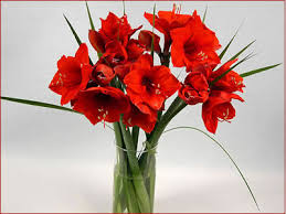 christmas bell flower
