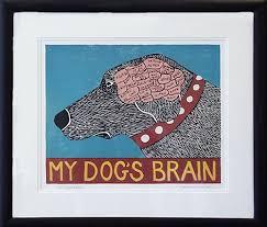 dogs brain