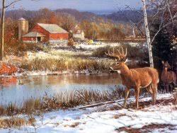 deer screensaver