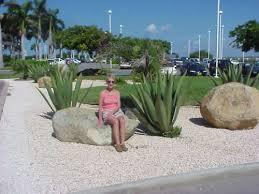 aruba plants