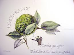 botanical artists