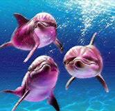 pink river dolphin facts