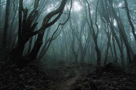 dark forest photos