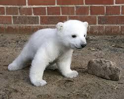 a polar bears habitat