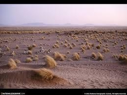 desert landscapers