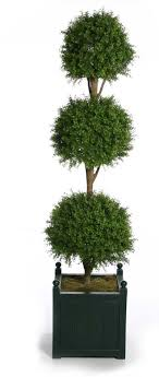topiary boxwood