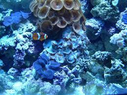 aquarium clam