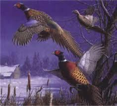 game bird hunting