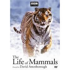 mammals photo