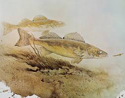 fish art prints