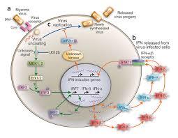 myxoma virus