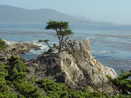 picture of cypress tree