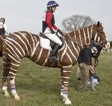 cross horse