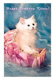 kitten birthday cards
