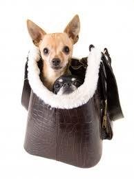 handbag dog