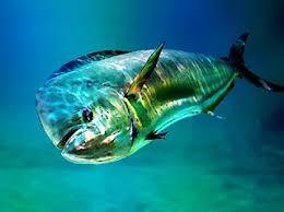 pelagic species