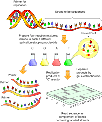dna sequencing process