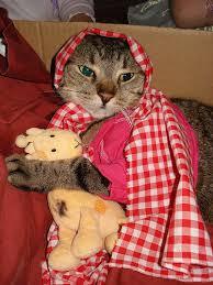 cat dressing up