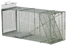 bobcat traps