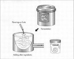 milk fermentation