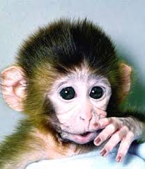 pictures of the monkeys