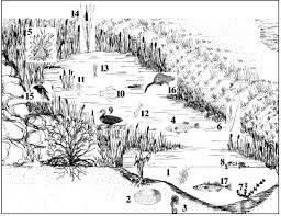 pond water ecosystem