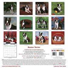 boston terrier calendars