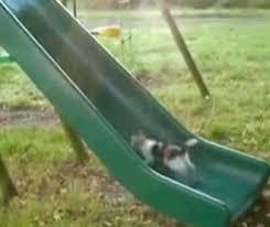 go kitty