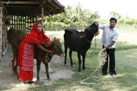 bagerhat bangladesh