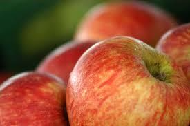 free fruit photo