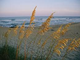 beach scene picture