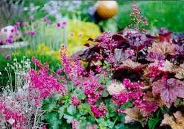 bell plants