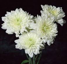 pictures of white flowers