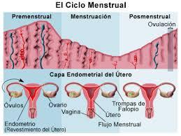 ciclo mensual