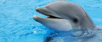 endangered animals dolphins