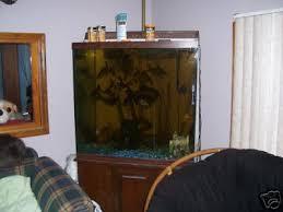 gallon fish tanks