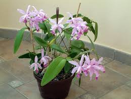 plant with flowers