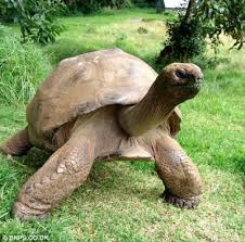 animal tortuga