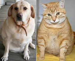 pets cats and dogs
