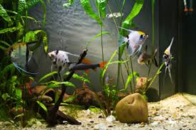 home akvarium