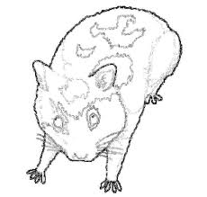 hamster colouring pages
