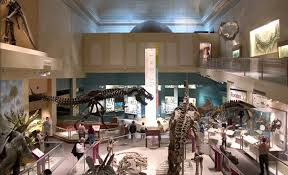 museum of natural history dinosaurs