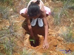 madagascar deforestation