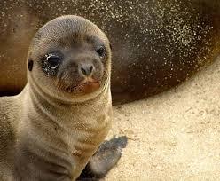 animals on the galapagos island