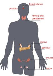 body glands