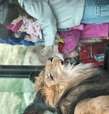denver zoo animals