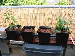 hydroponic set up