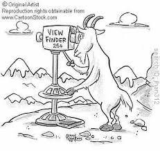 animals rams