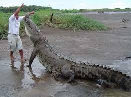 pictures of crocodiles